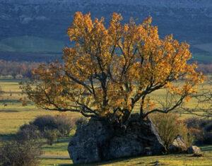 Monte Valonsadero en Soria