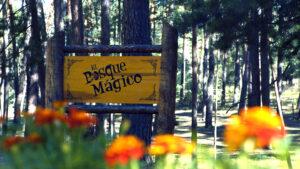 que-ver-en-soria-en-1-dia-bosque-magico-soria-ni-te-la-imaginas.jpg