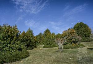 Bosque de acebos de Garagüeta