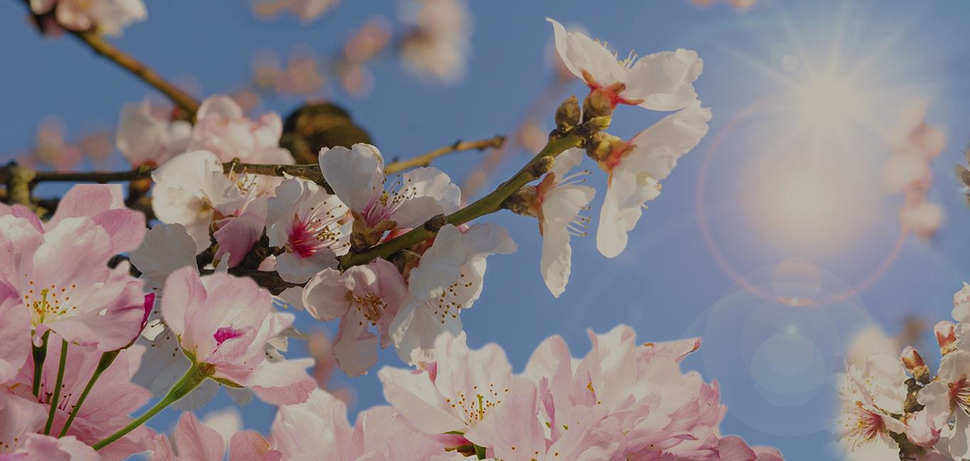 Qué hacer en Soria en primavera